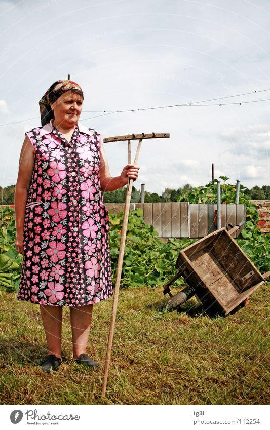 was bleibt? Mensch Frau Himmel alt blau grün schön rot Tier Tod Wiese Ernährung Lebensmittel Gras Glück Arbeit & Erwerbstätigkeit