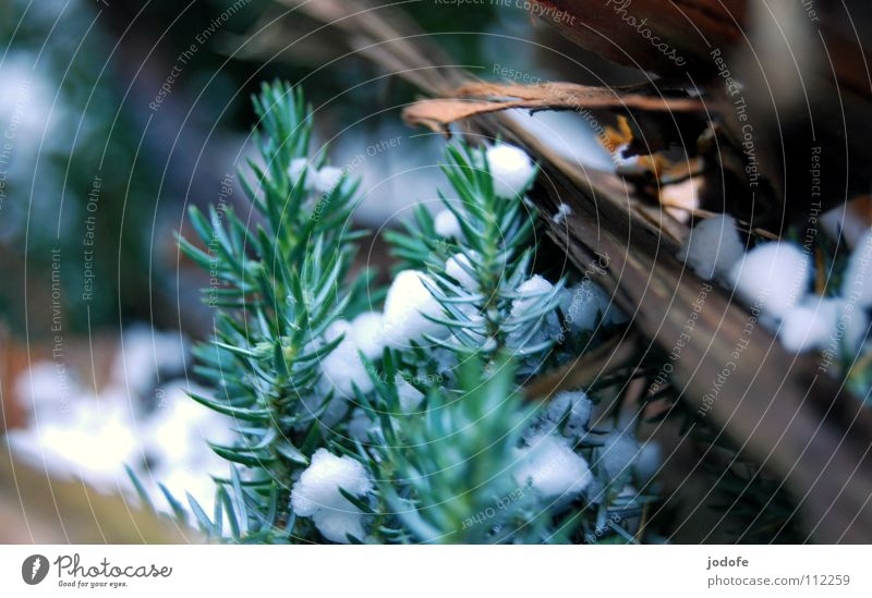 °^Schneehagel^° Natur Weihnachten & Advent weiß grün Winter ruhig Einsamkeit kalt Schnee Herbst Holz Eis braun Frieden gefroren