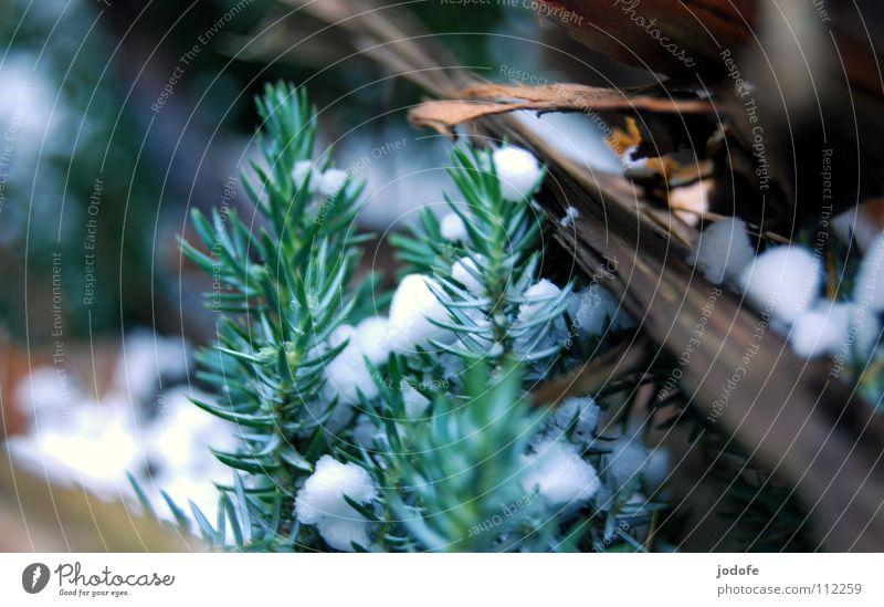 °^Schneehagel^° Tannenzweig Holz Baumrinde braun grün weiß Tannennadel Winter Herbst ruhig bedecken kalt Eis gefroren Einsamkeit Makroaufnahme Nahaufnahme Hagel