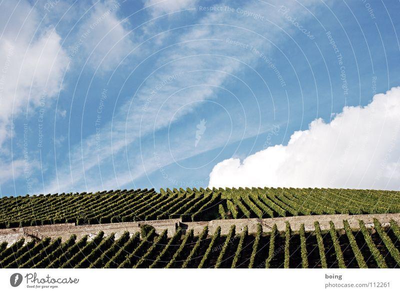 Weinberg Herbst Wein Reihe Ernte Alkohol Terrasse Sekt Berghang Weinbau Bayern Weintrauben Italien Rheinland-Pfalz Weinberg stoßen Weinlese