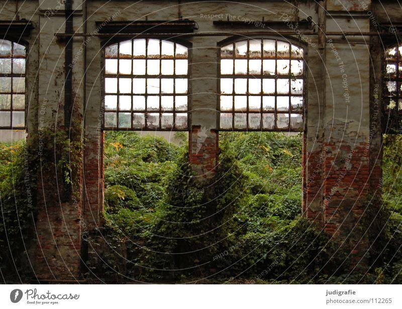 Industrieromantik Natur alt Einsamkeit Farbe Fenster Raum leer Wachstum Fabrik kaputt Baustelle verfallen Lagerhalle Säule Demontage