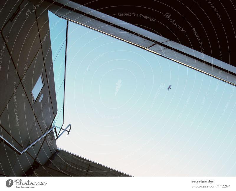 zum schönen alsterblick Himmel blau Sommer Winter Einsamkeit dunkel hell Vogel Raum Glas Schilder & Markierungen fliegen Beton Treppe modern