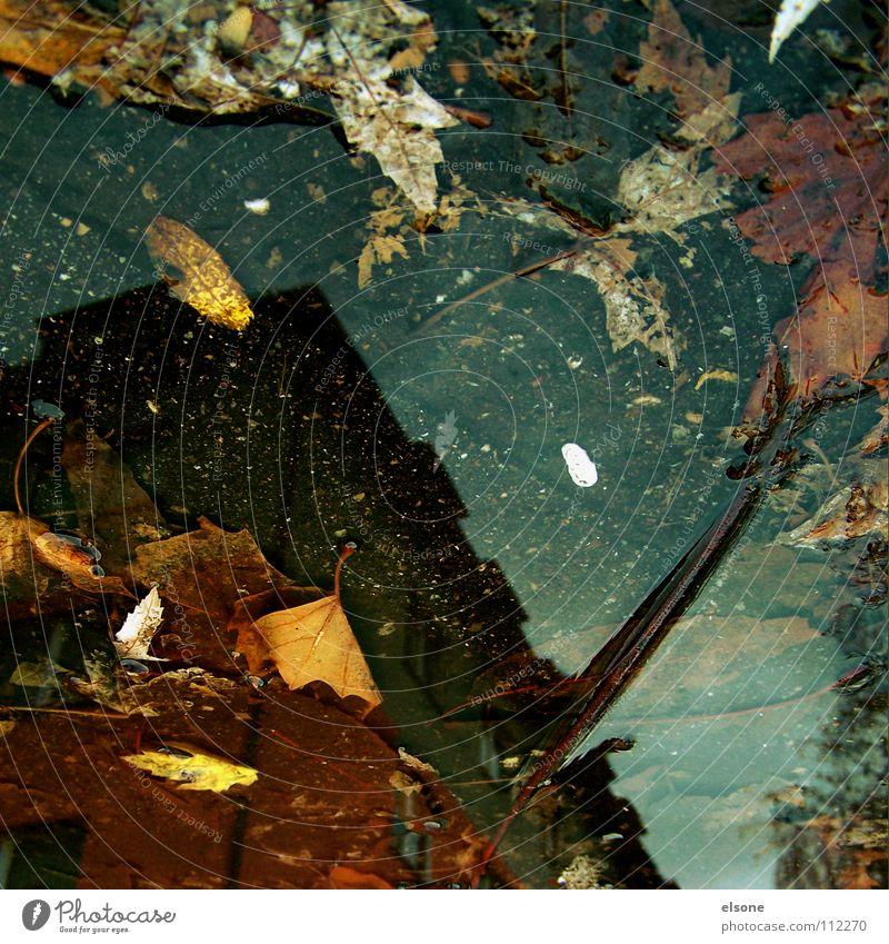 ::COLOUR IN THE CITY:: Herbst mehrfarbig Blatt Sturm nass Pfütze Haus Gebäude laublos Reflexion & Spiegelung Wohnung Baum Kunst Pforzheim Kultur Farbe Regen