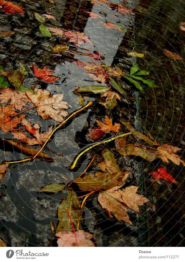 Worst Herbst ever Blatt Pfütze nass kalt Regen schlechtes Wetter Langeweile