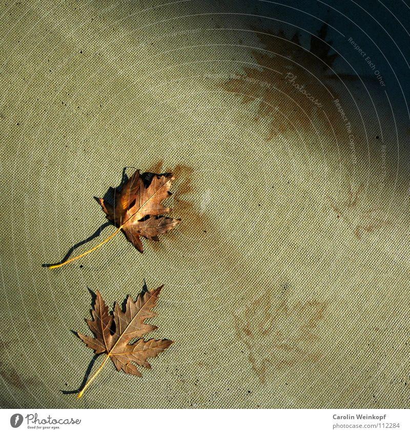 Sein und Schein V Blatt Herbst Jahreszeiten Verlauf November Humor Dezember Oktober September herbstlich Abdruck Ironie imitieren