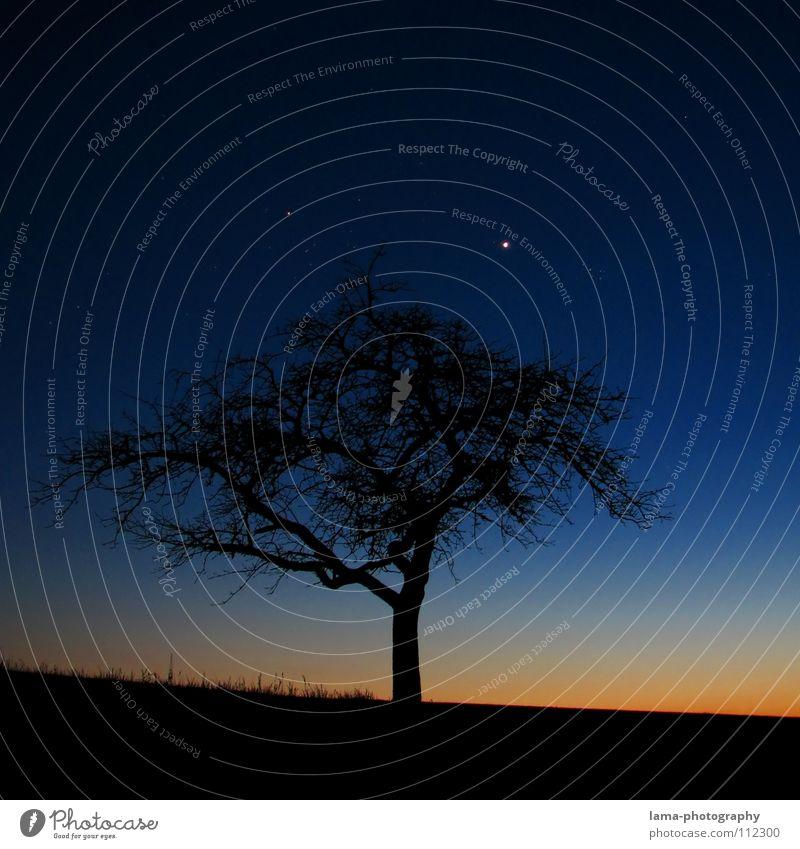 Mein Weihnachtsbaum Stern Baum Winter Blatt Wiese Gras Feld trocken verdursten Sonnenuntergang Dämmerung Nacht Sonnenaufgang Morgen träumen Silhouette Berghang