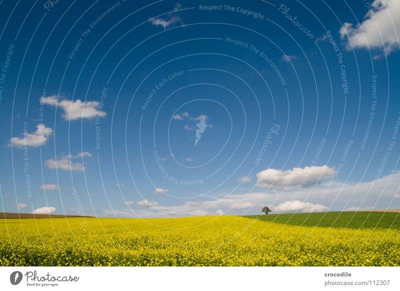 scho wieder raps Himmel Baum Wolken Einsamkeit gelb Frühling Freiheit Feld Horizont Streifen Stengel Blühend Amerika Baumstamm Bayern Schönes Wetter