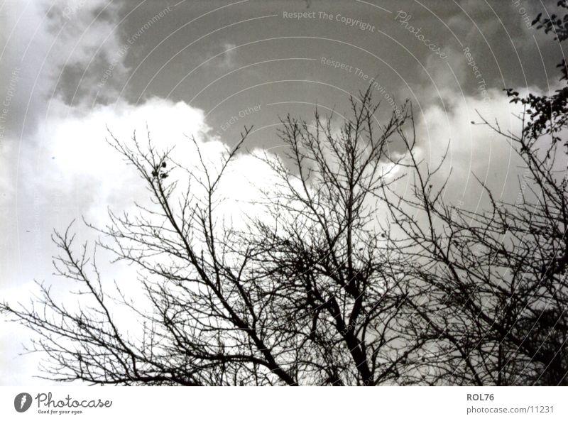 Geäst Baum Wachstum Licht Himmel Ast Zweig