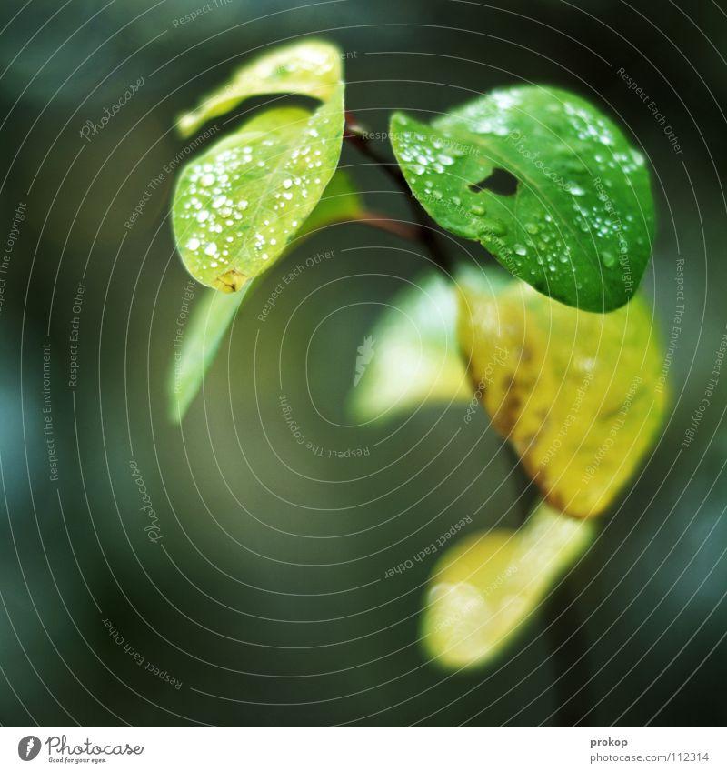 For the ladies Blume Blatt Pflanze grün Grünpflanze Herbst Winter kalt feucht zart nass benetzt weich schön Frieden Qualität Seil Ast Wassertropfen