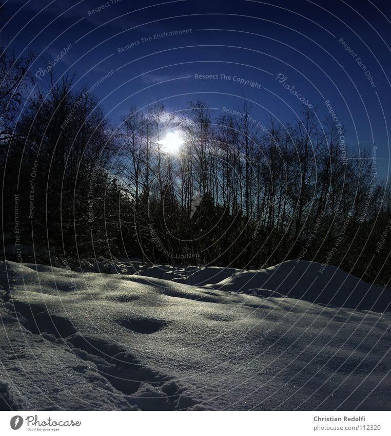 Wintereinbruch Schneelandschaft Pulverschnee Spaziergang Waldrand schön ästhetisch kalt Eis Landschaft Baum Himmel Wege & Pfade