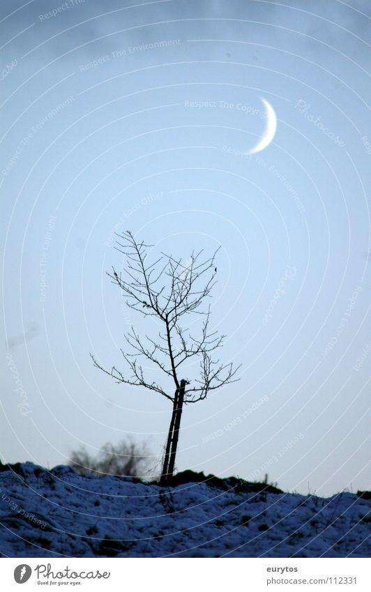 Winterdämmerung kalt nass weiß Sichelmond groß Mondschein Baum grün Sträucher Halbmond erleuchten dunkel Nacht Dämmerung Geborgenheit zart zerbrechlich schön