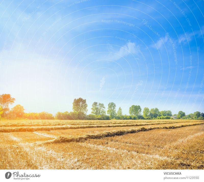 Sommer Feld mit Stroh Ernte Himmel Natur Sommer Sonne Baum Landschaft gelb Farbstoff Herbst Hintergrundbild Lifestyle Feld Design Schönes Wetter Landwirtschaft Wolkenloser Himmel