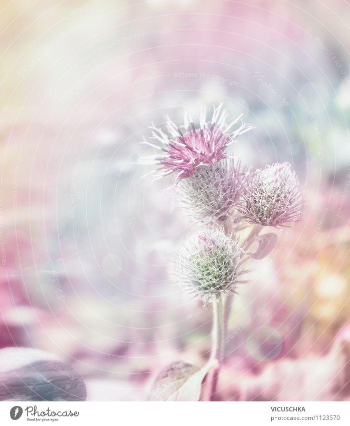 Distelblüte Natur Pflanze schön Sommer Herbst Wiese Hintergrundbild Garten hell rosa Lifestyle Park Design Romantik Symbole & Metaphern violett