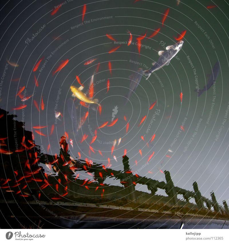 der schwarm Wasser See Küste fliegen Fisch mehrere Dekoration & Verzierung China Ackerbau Teich Surrealismus Angeln Schwimmhilfe gestellt Goldfisch Schwarm