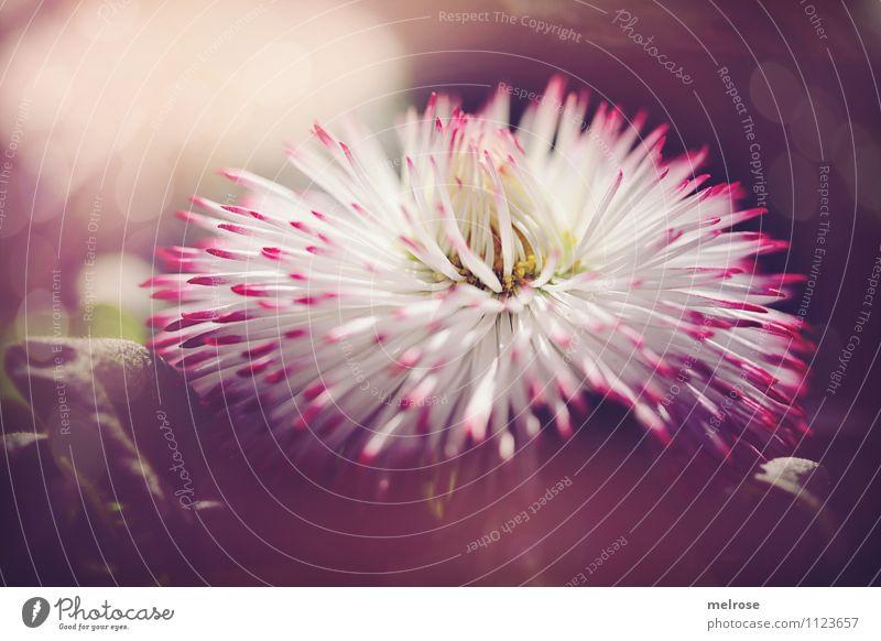 """Wuschelkopf """"250.zigstes"""" elegant Stil Valentinstag Geburtstag Natur Pflanze Sommer Schönes Wetter Blume Gras Moos Blatt Blüte Wildpflanze Unschärfe"""