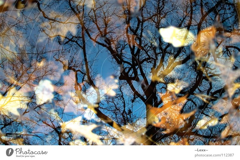 Herbstspiegel II Wasser Baum blau ruhig Blatt schwarz Wald Tod Traurigkeit See Trauer Frieden Spiegel Jahreszeiten friedlich