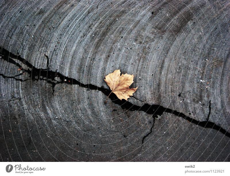 Nachklang Pflanze Blatt Straße Asphalt liegen dehydrieren dunkel trist trocken unten Stadt trösten ruhig demütig Traurigkeit Trauer Tod Schmerz Ende