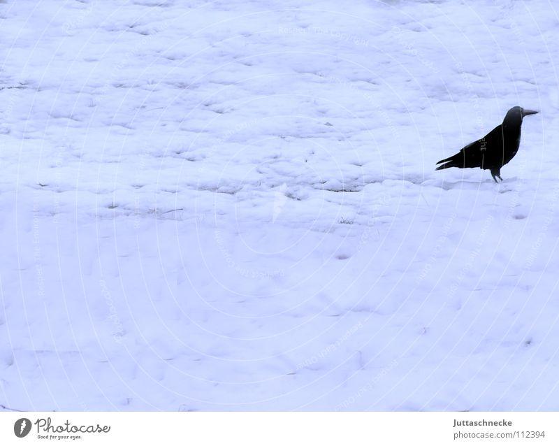 Rechts Rabenvögel Krähe November Winter Einsamkeit schwarz weiß kalt Nebel schlechtes Wetter Dezember Vogel Feld Schneedecke Trauer Verzweiflung Juttaschnecke