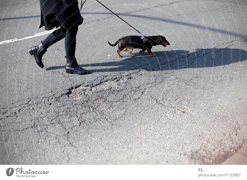 ab nach draußen Freizeit & Hobby Mensch feminin Frau Erwachsene Leben Beine 1 30-45 Jahre Verkehr Verkehrswege Fußgänger Straße Wege & Pfade Tier Hund Dackel