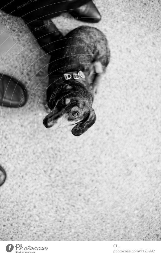 dackelblick Hund Mensch Tier Freizeit & Hobby Schuhe Lebensfreude beobachten niedlich Boden Pause Neugier Haustier Tiergesicht Treue Tierliebe Dackel