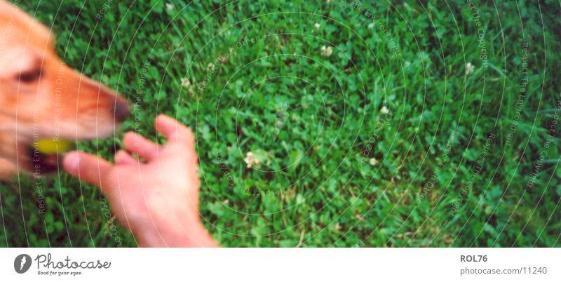 Gib her! Spielen Gras Hund Freundschaft