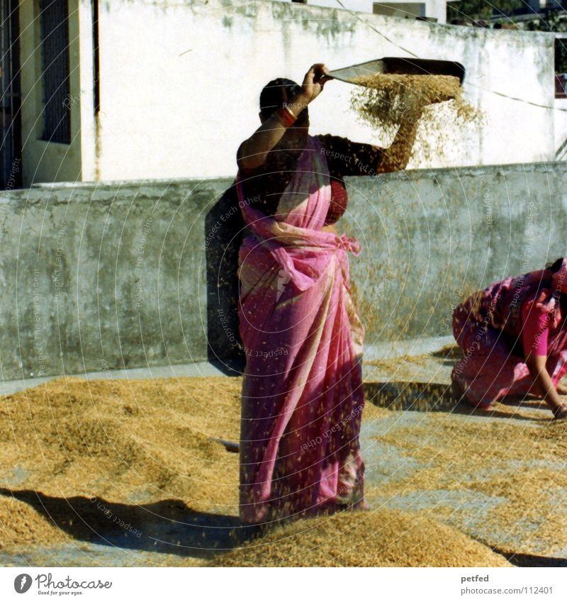 Reisernte Indien Asien Abenteuer Oktober Herbst Frau Inder Arbeit & Erwerbstätigkeit Hausfrau Spreu Lebensmittel Dach Sari Rishikesh Ganges Erde Nationen