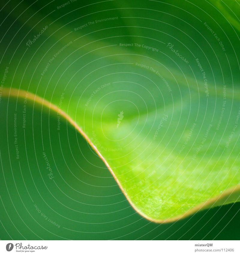 turn over a new leaf Natur grün schön Pflanze Blatt ruhig Erholung gelb dunkel Ernährung Wiese Leben klein Erde träumen hell