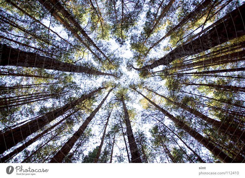 into the galaxy Himmel Baum blau Wald oben Holz hoch Holzmehl Galaxie