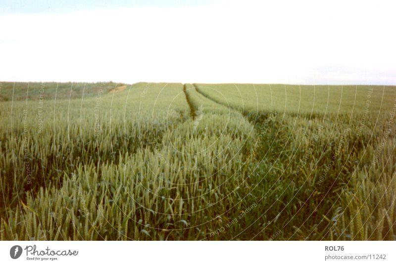Der Weg ins Unbekannte Himmel grün ruhig Feld Getreide