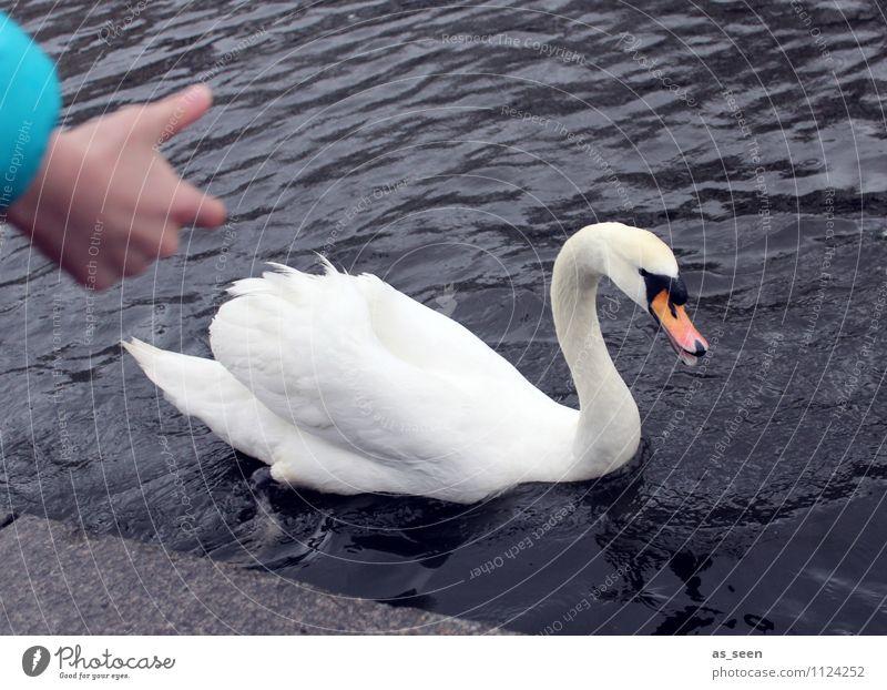 Schwan füttern Natur weiß Freude Tier natürlich grau Schwimmen & Baden orange Kindheit authentisch ästhetisch Flügel Lebensfreude Neugier türkis