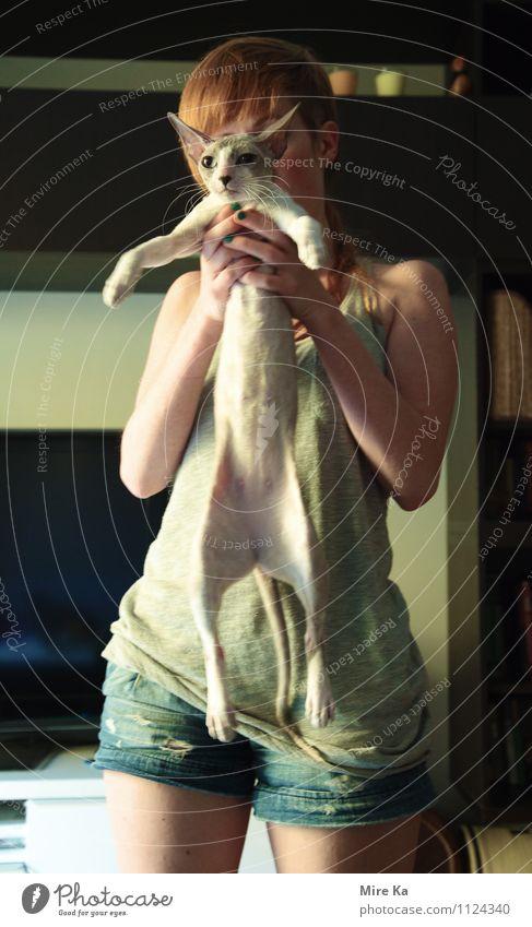 cat body Katze Tier lustig genießen rein Mut hängen Wissen Tierliebe