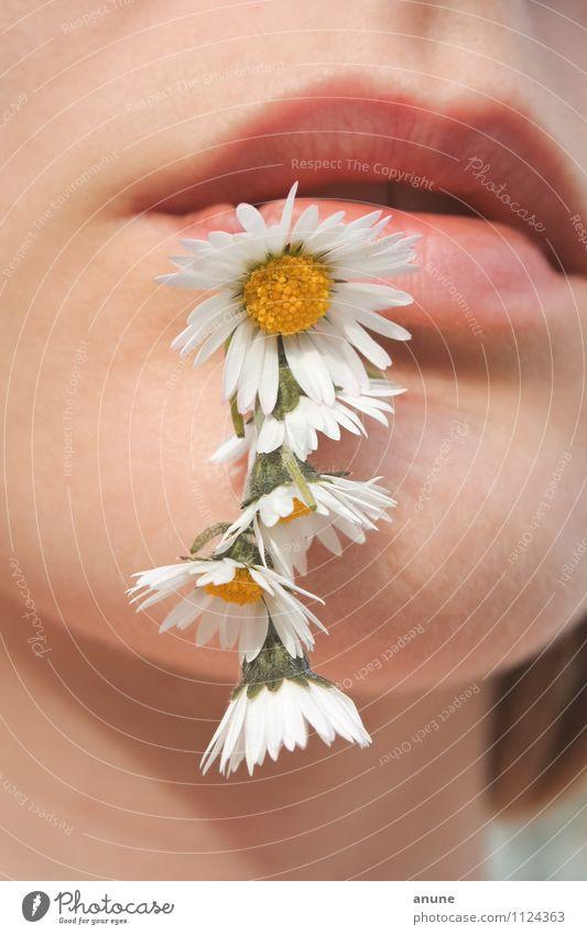 Gänseblümchenmund Mensch Frau Natur Jugendliche Pflanze schön Sommer Junge Frau Blume 18-30 Jahre Erwachsene Wiese Frühling Blüte natürlich Essen