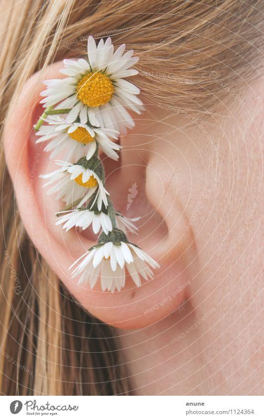 Gänseblümchenohr Mensch Frau Kind Natur Jugendliche Pflanze schön Sommer Junge Frau Blume 18-30 Jahre Erwachsene Frühling Blüte natürlich Haare & Frisuren