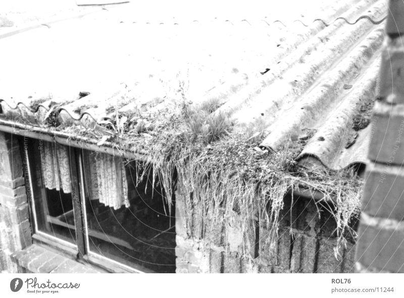 Natures Work Haus Fenster Dach Gardine