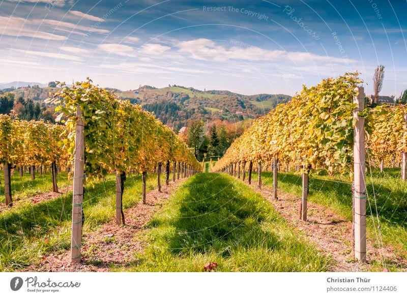 Erntezeit Alkohol Wein Wellness Leben harmonisch Ferien & Urlaub & Reisen Tourismus Ausflug Freiheit Sightseeing Fahrradtour Sommerurlaub Berge u. Gebirge
