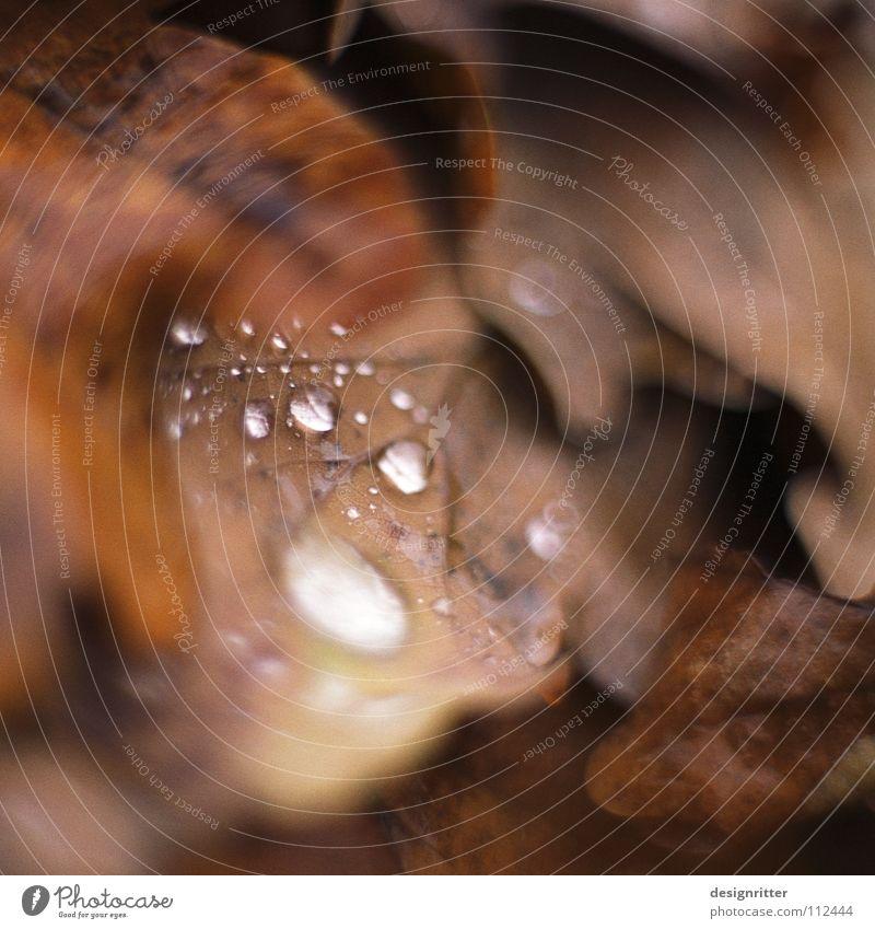 Novemberabschied Wasser schön alt Blatt kalt Herbst Tod grau Regen braun Wassertropfen nass fallen vergangen Herbstlaub