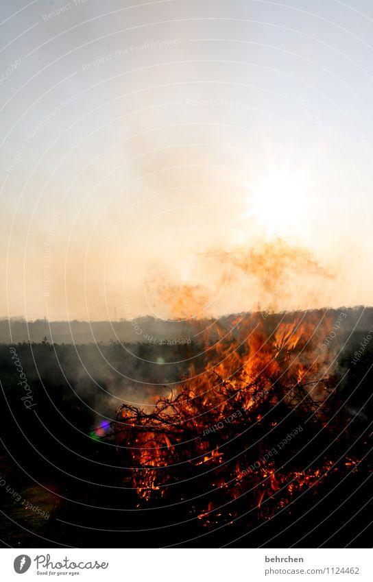 lodernd Feuer Himmel Wolkenloser Himmel Frühling Sommer Herbst Schönes Wetter Wind Sträucher Feld Holz Rauch heiß Wärme orange Freude Begeisterung Kraft Macht