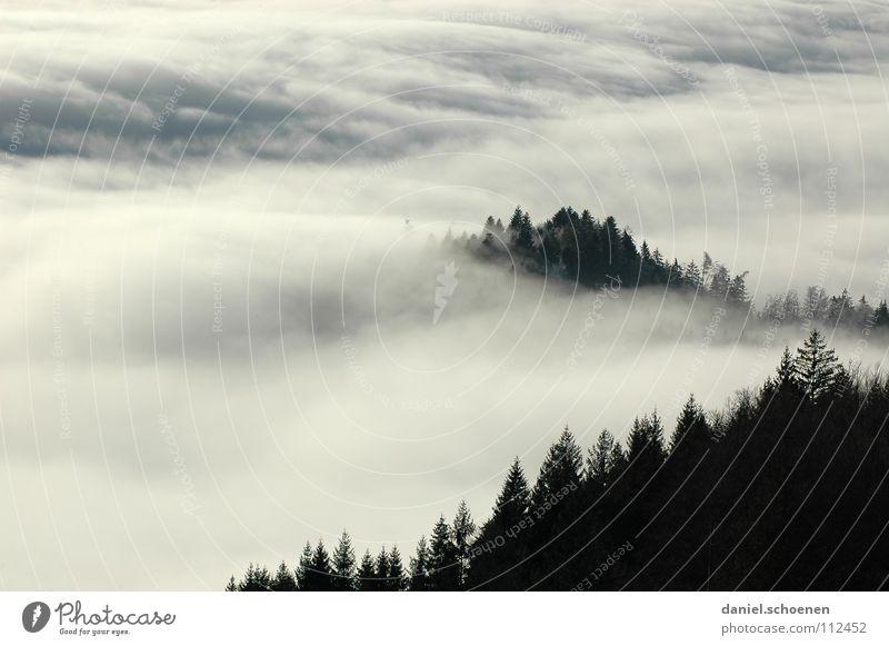 Invasionswetterlage 2 Nebel Wolken schwarz weiß abstrakt Hintergrundbild Baum Herbst Schwarzwald Wald Winter Tanne Himmel Berge u. Gebirge Kontrast Schatten