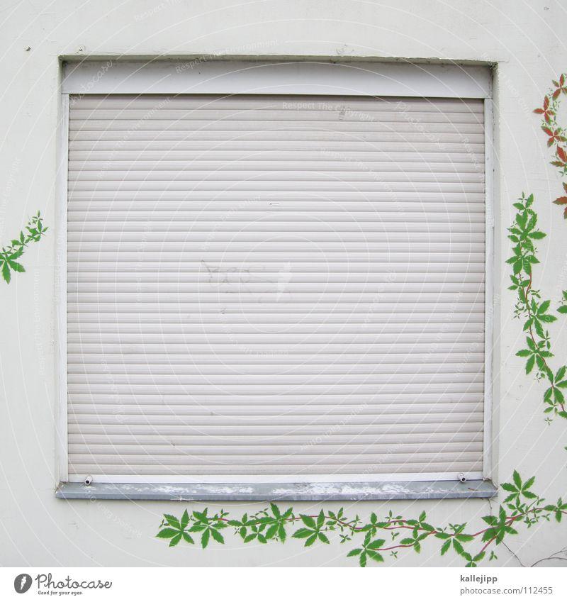 dornröschenschlaf Fenster Rollladen Rollo Jalousie Haus Wand privat schlafen Schlafzimmer laut ruhig dunkel verdunkeln Naturwuchs Dekoration & Verzierung Kunst