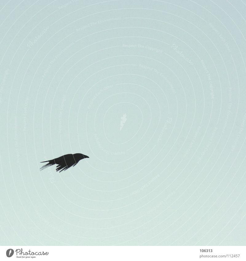 BLACK IS NO COLOUR Himmel schwarz Einsamkeit Freiheit Vogel fliegen frei leer Luftverkehr Frieden sehr wenige Rabenvögel Krähe Tier Freiraum Aerodynamik