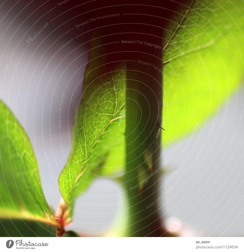 Stengel & Blatt Natur Pflanze schön grün Sommer Blume Umwelt Leben Frühling Gesundheit Garten Wachstum leuchten authentisch ästhetisch Beginn