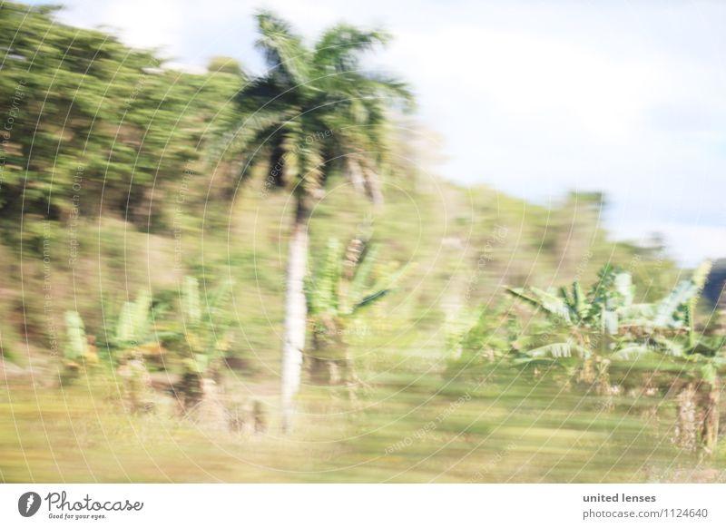 FF# Palmenwisch Ferien & Urlaub & Reisen Sommer Kunst Zufriedenheit Sommerurlaub Kuba Urlaubsfoto Palmenwedel Urlaubsstimmung Urlaubsort Urlaubsverkehr