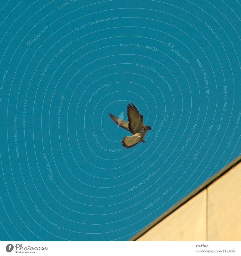 Fasten Seatbelts Himmel weiß blau schwarz Einsamkeit gelb Herbst Vogel Luftverkehr Feder Flügel Flugzeuglandung Taube Aerodynamik