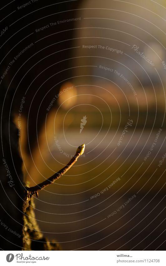 triebstark Trieb Pflanzentrieb Baumstamm Frühling Wachstum Blattknospe Frühlingsgefühle Kraft entstehen austreiben frisch Dynamik Farbfoto Außenaufnahme