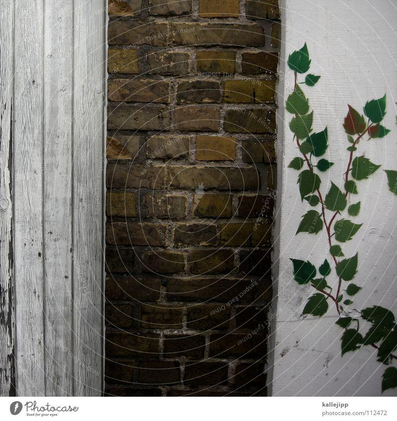 dornröschenschlösschen weiß grün Pflanze ruhig Haus dunkel Wand Fenster Garten Park Gebäude hell Kunst Wohnung schlafen Wachstum