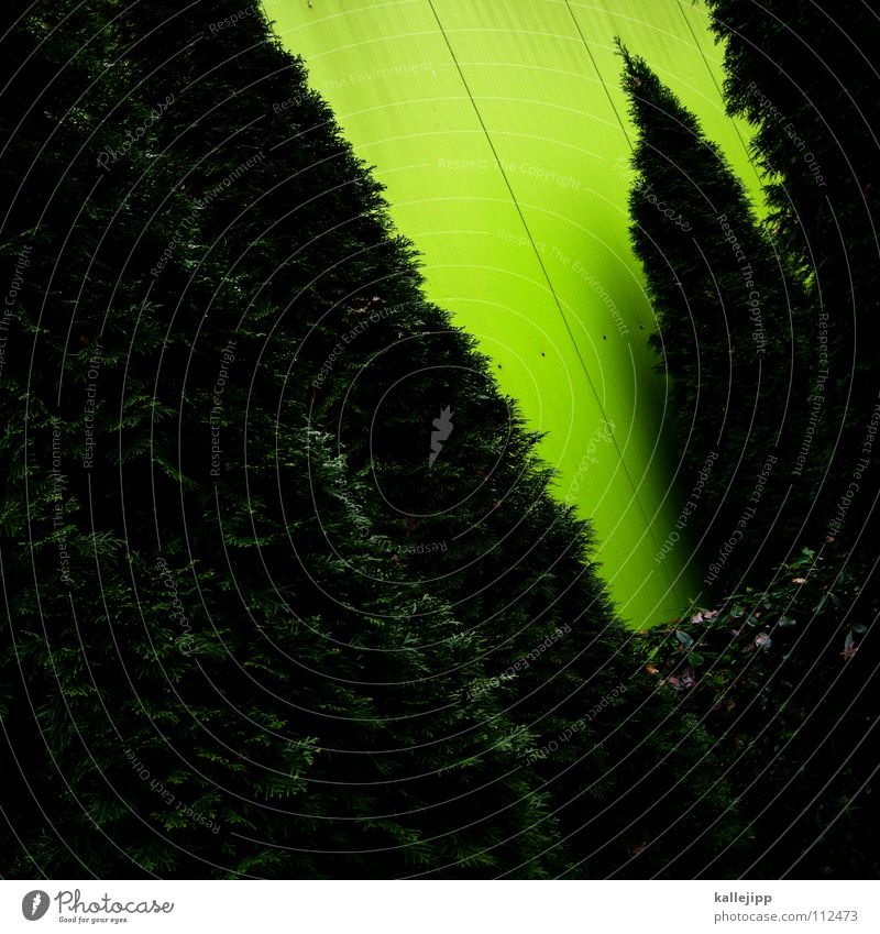 beidensiebenzwergen weiß grün Pflanze Haus ruhig dunkel Wand Garten Gebäude hell Kunst Park Wohnung Wachstum schlafen Häusliches Leben