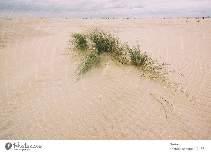 dünengras Natur Ferien & Urlaub & Reisen Pflanze grün Erholung Meer Landschaft ruhig Wolken Strand Ferne Umwelt Gefühle Gras Küste Freiheit