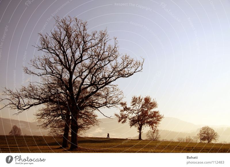 Herbstnebel Baum Ferne Landschaft Nebel Spaziergang November