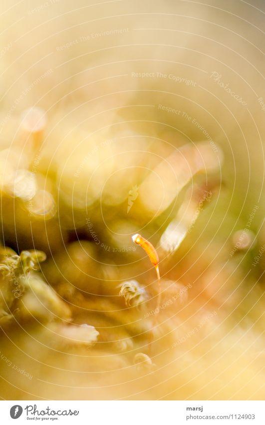 sooo klein Natur Sommer Frühling natürlich außergewöhnlich leuchten authentisch Erfolg Blühend einfach niedlich dünn Samen verstecken Moos