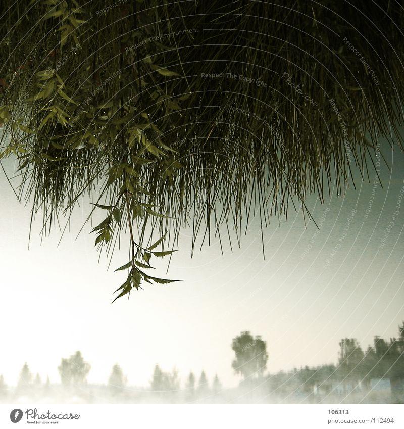 SEEGRAS Himmel Natur Wasser grün Baum Haus Ferne Wald Erholung Wiese Umwelt Gefühle Gras Frühling träumen Stimmung